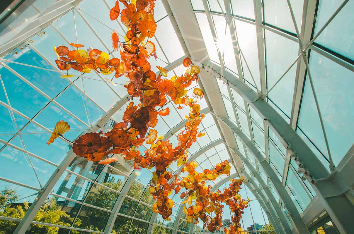 Interior plants - receiving a lot of light